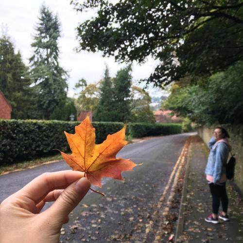 9_Autumn_2