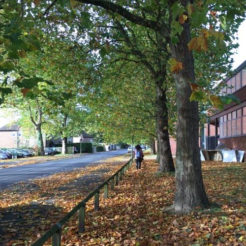 9_Autumn_3